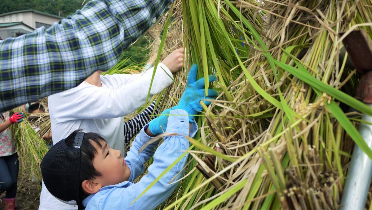 稲刈り体験イベントもできます!
