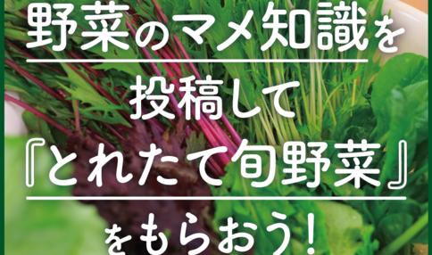 << SNS限定>>年末大感謝キャンペーン!「へぇ〜!」な野菜マメ知識をシェアして『採れたて旬野菜』をGET♪