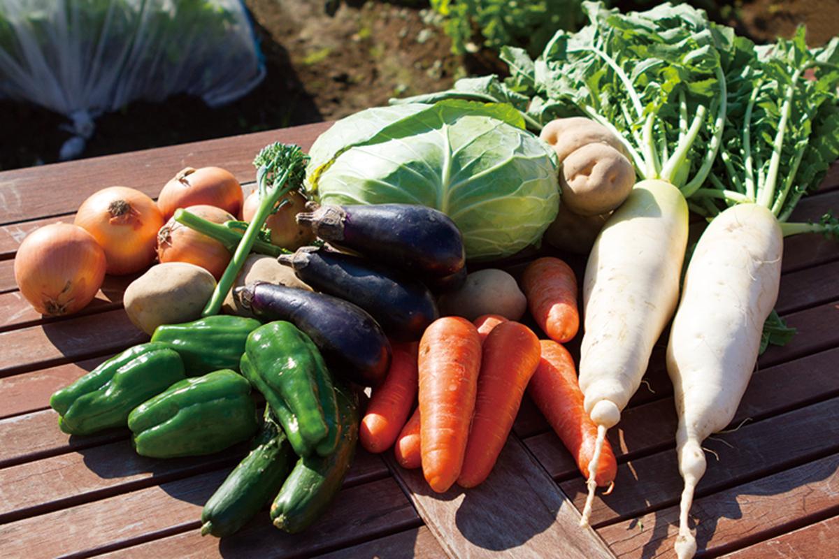 畑で育った取れたてお野菜