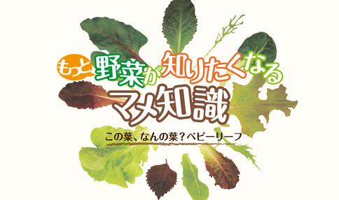 もっと野菜が知りたくなるマメ知識 vol.1「この葉、なんの葉?ベビーリーフ」