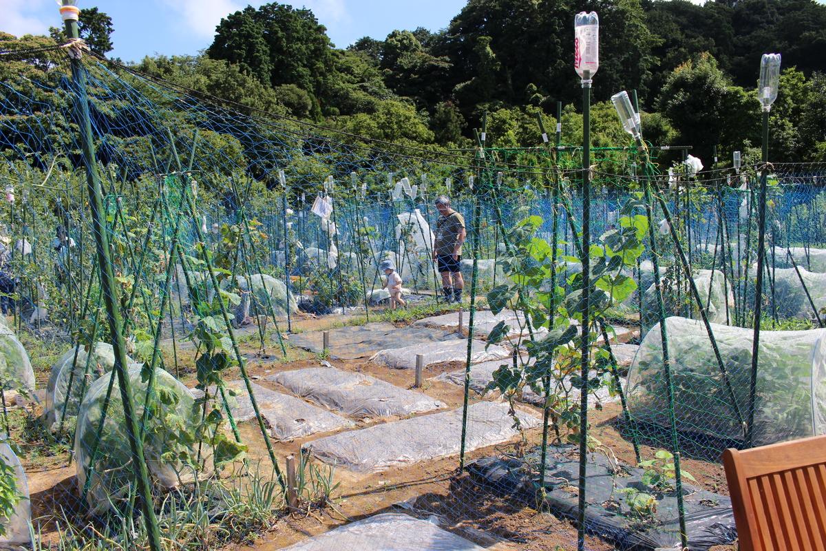 多くの野菜が茂っている様子です