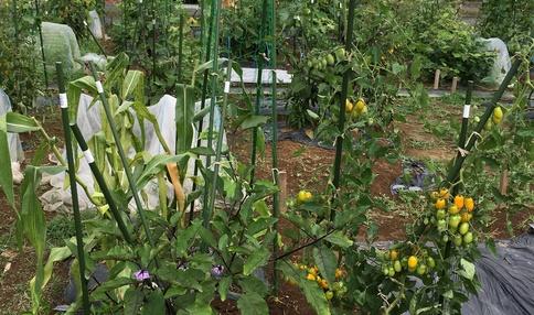 区画内で多くのお野菜が育てられています