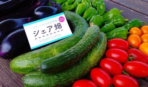 シェア畑で採れた夏野菜 おいしそうですね!