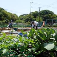 シェア畑 横浜鶴見