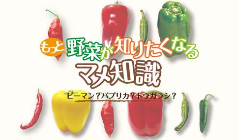 もっと野菜が知りたくなる豆知識 vol.2「ピーマン・パプリカ・トウガラシの違いは?」