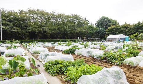 畑の様子です!多くの野菜が育っています!