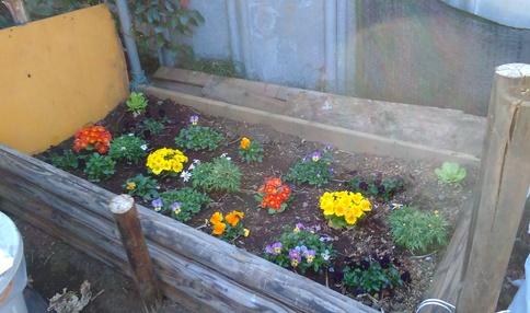 シェア畑溝の口にはお花畑も