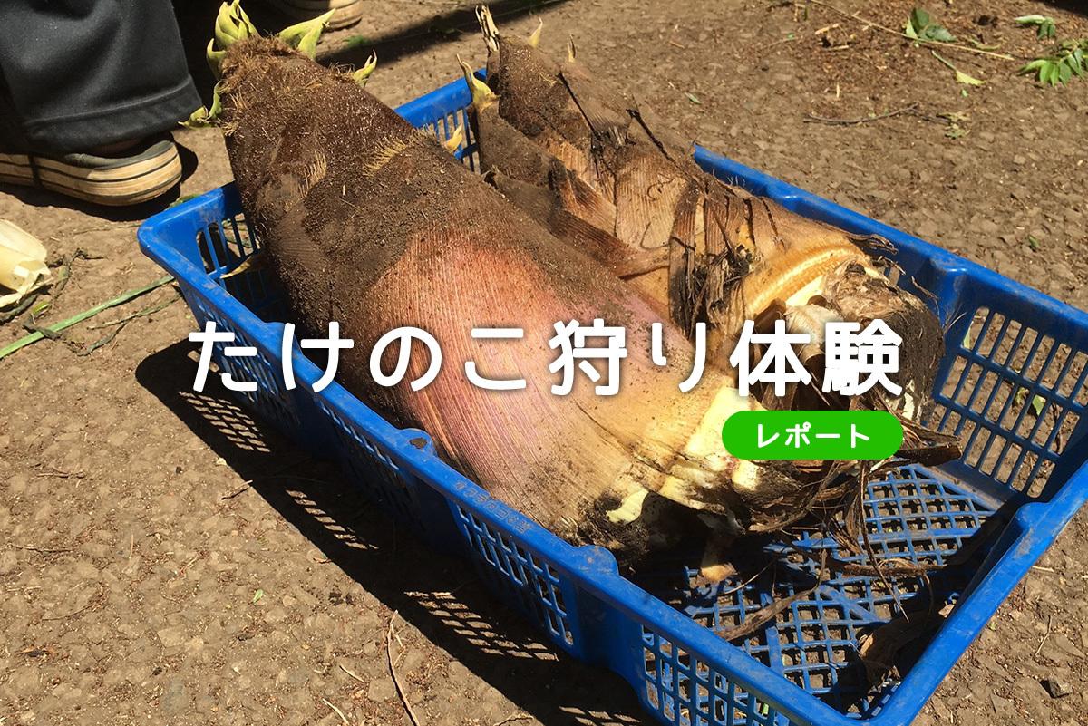 新鮮野菜を食べよう!中山農園でたけのこ狩り体験