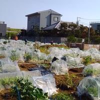 江戸川小岩ファーム