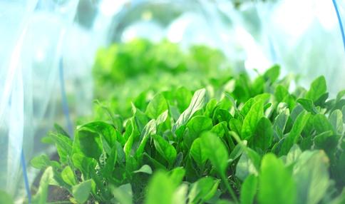 【アンケート結果発表2】現役菜園アドバイザーの野菜づくり歴は?