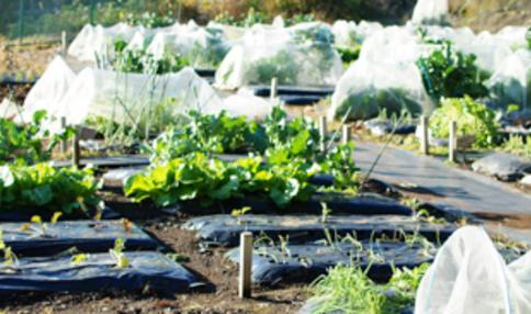 【2019年最新】東京都内の区民農園・体験農園の仕組み・料金等をまとめました!