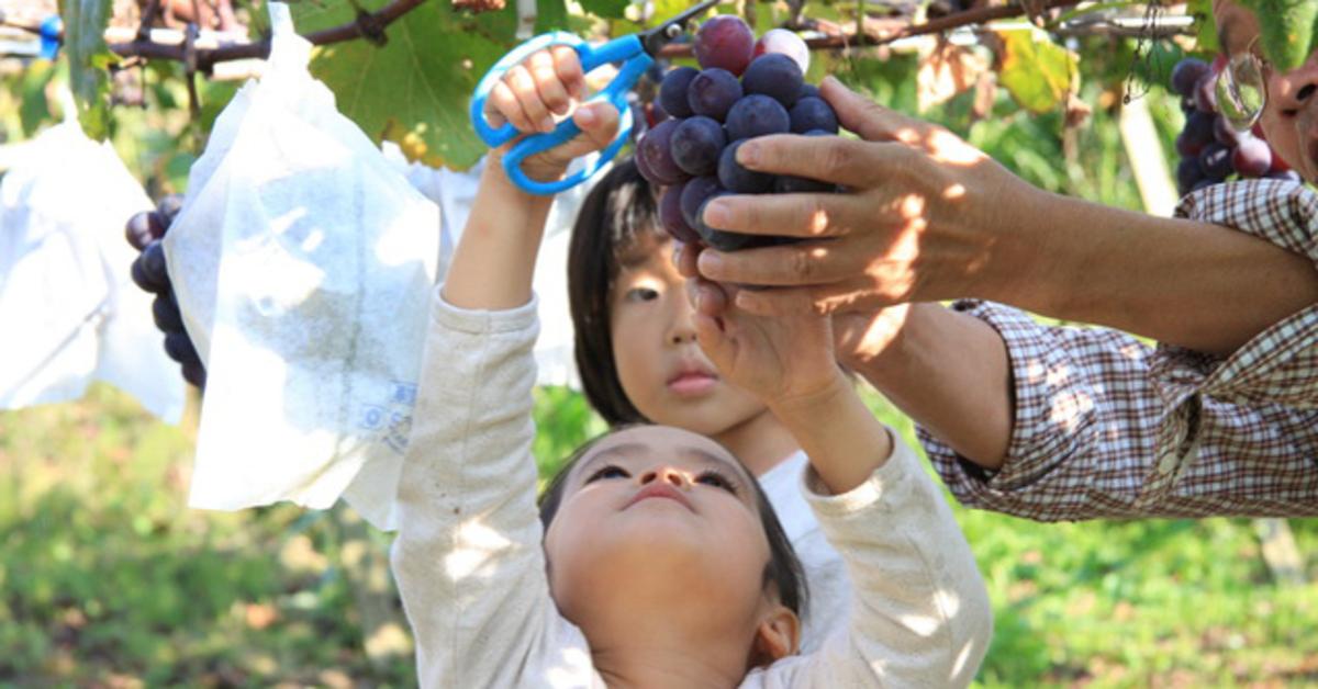 【一覧】こんなこともできるの!?東京都内近郊の農業体験をまとめました!