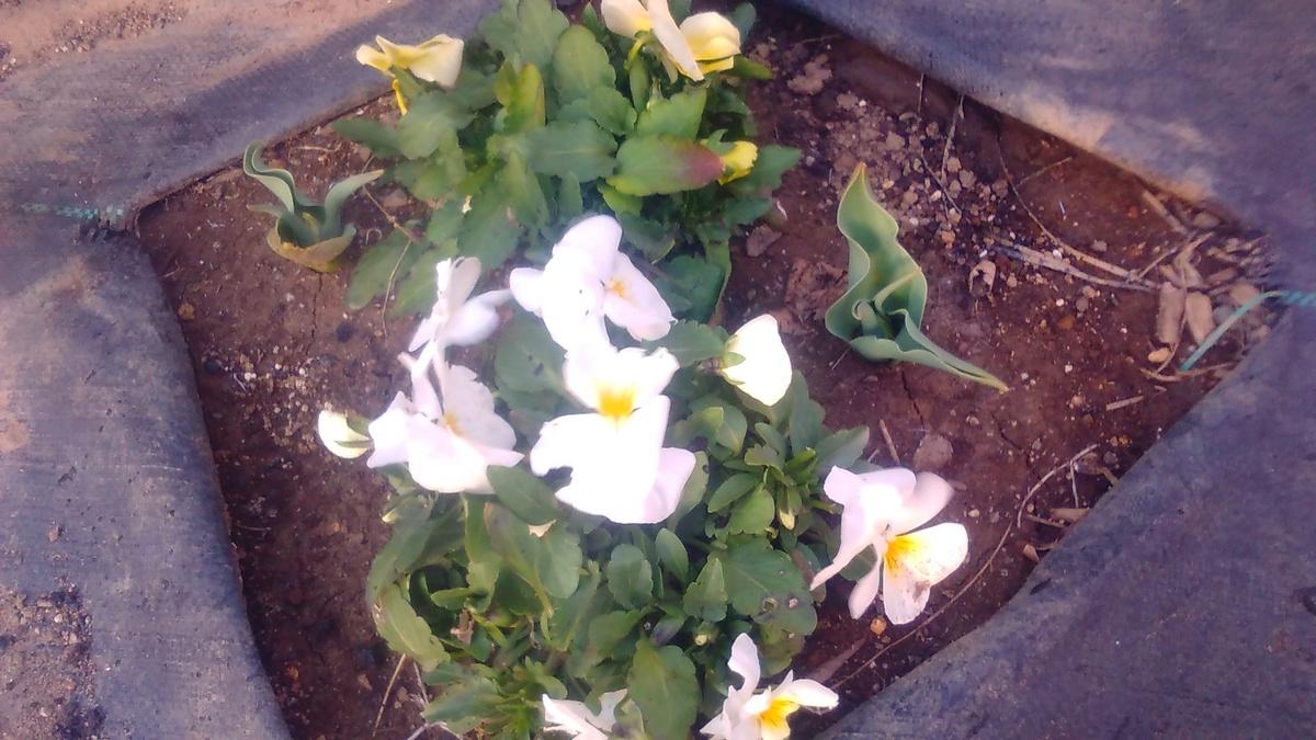 春の準備!花も野菜も♫
