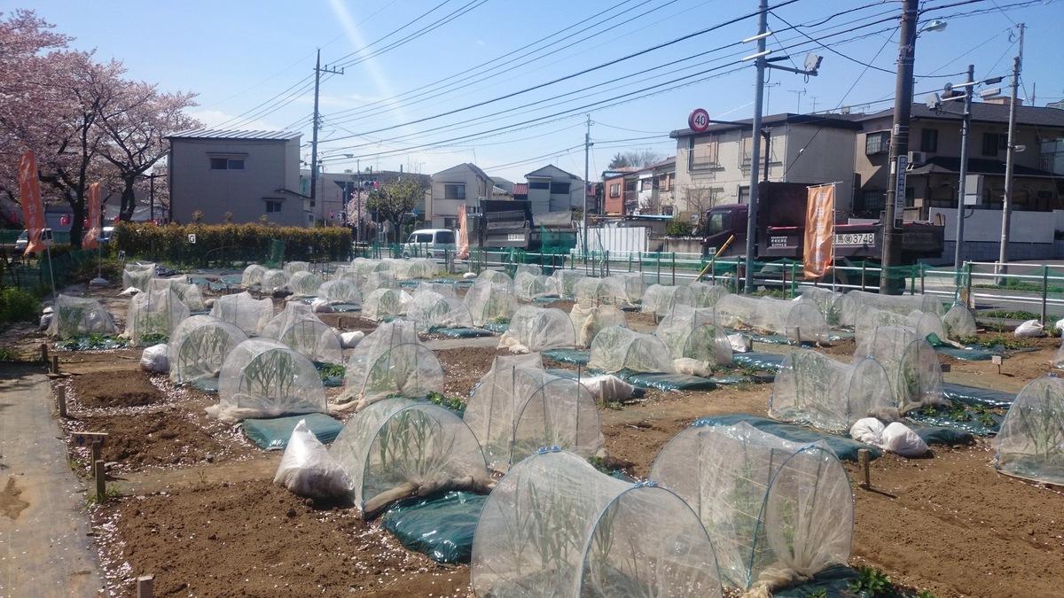 シェア畑 東武練馬