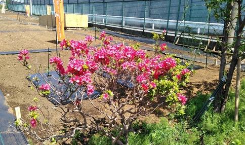 春にはきれいな花が農園を彩ります