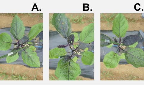 シェア畑ラボの栽培実験「肥料の量を変えると野菜はどう育つのか?」