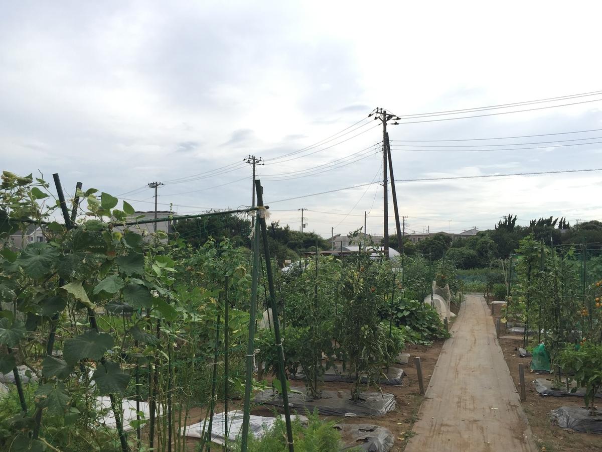 千葉検見川の農園風景です