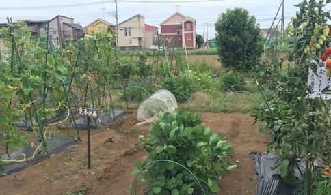 千葉検見川 農園風景