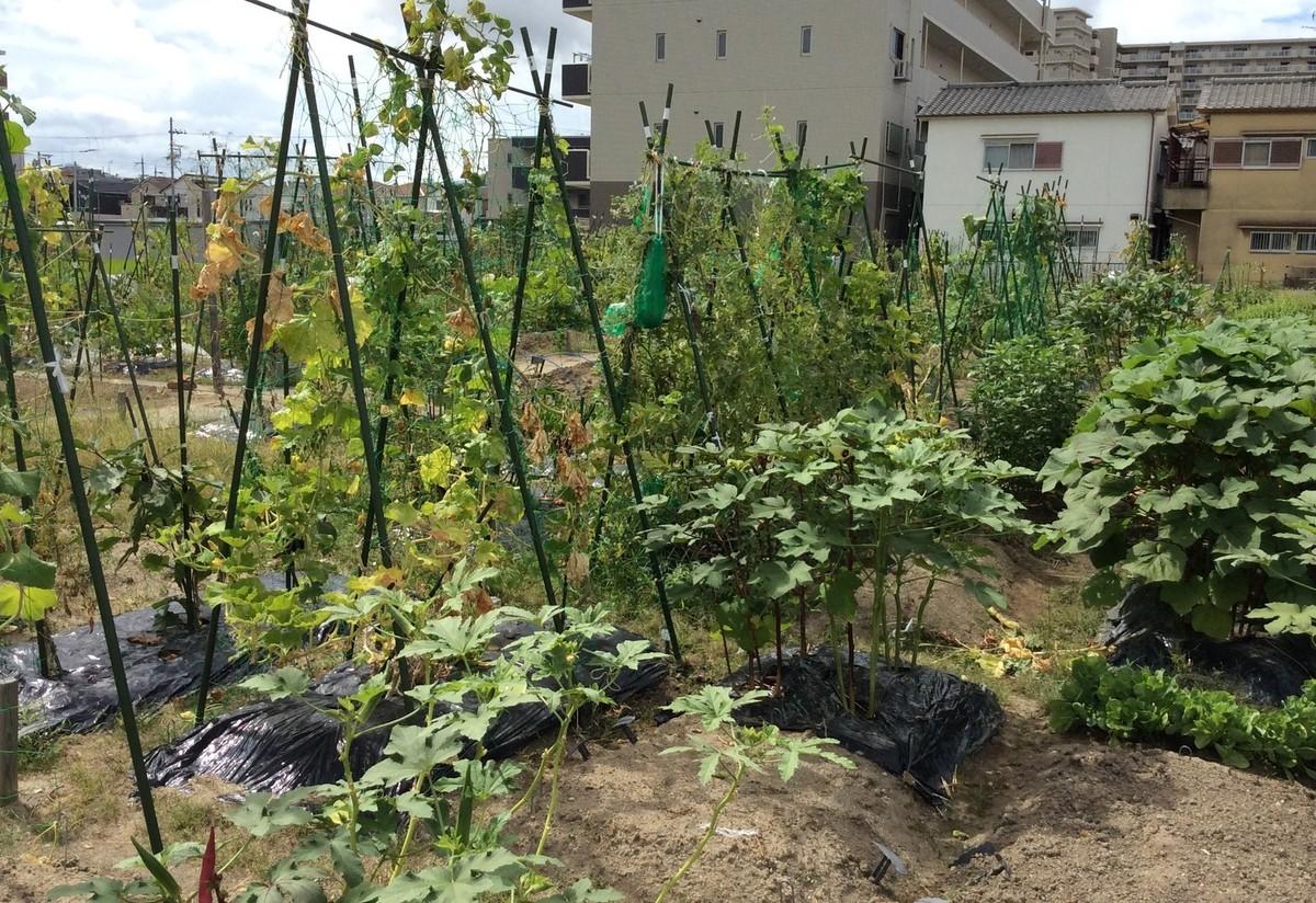 広々開放的な農園です