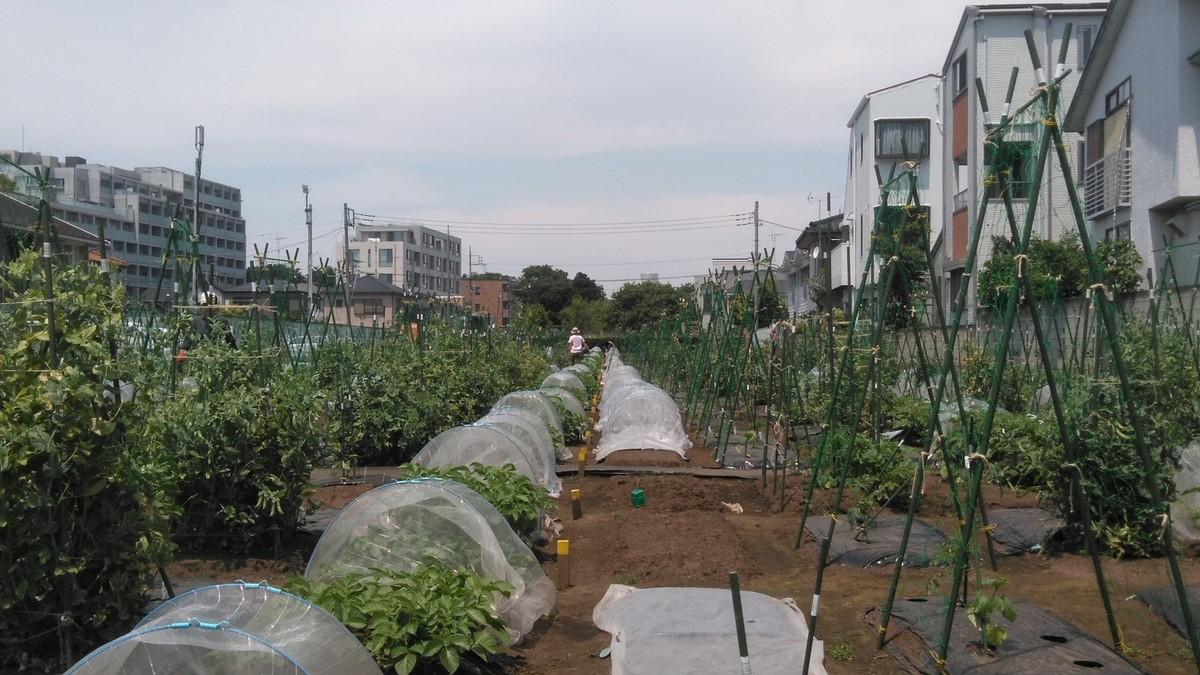 シェア畑仙川伊藤農園のようす
