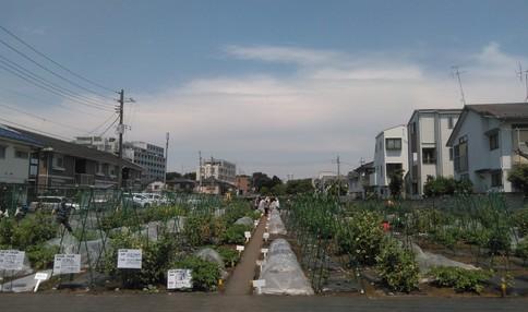 シェア畑 仙川 伊藤農園