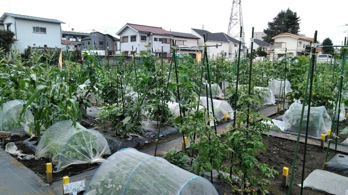 都内の農園で野菜づくりを楽しんでみませんか?