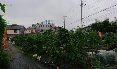 野菜がぐんぐん育ってます