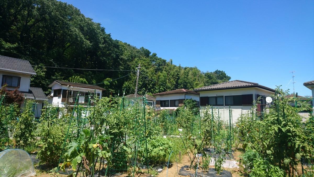 静かな農園です。
