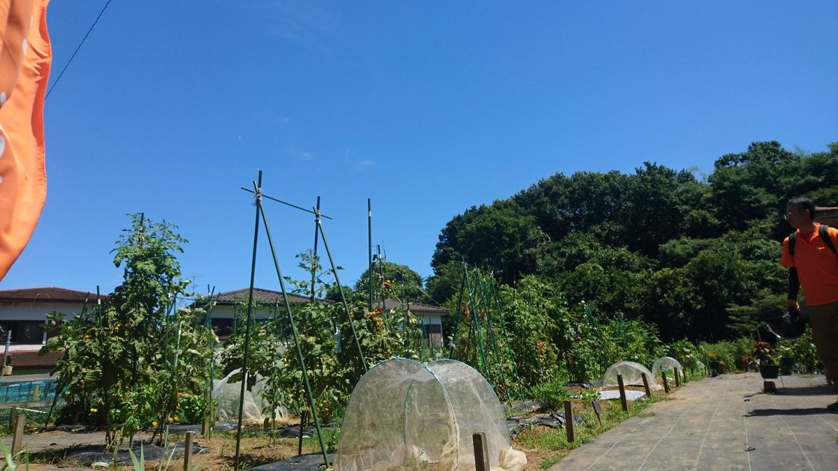 シェア畑 戸塚舞岡