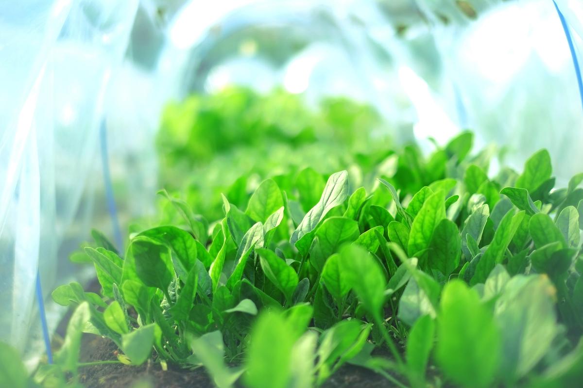 年間を通して様々な野菜作りを体験できます!