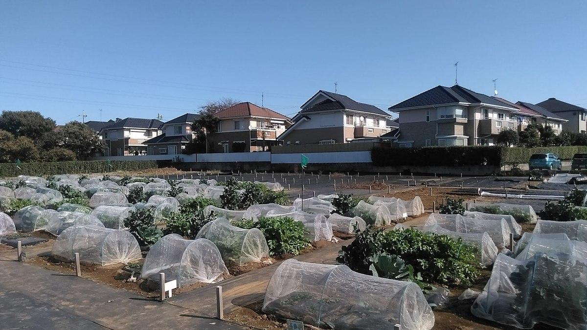 冬野菜は防虫ネットで覆います!