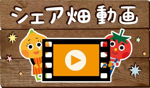 【動画で学べる】家庭菜園の初心者がタマネギに挑戦すべき5つのポイント!