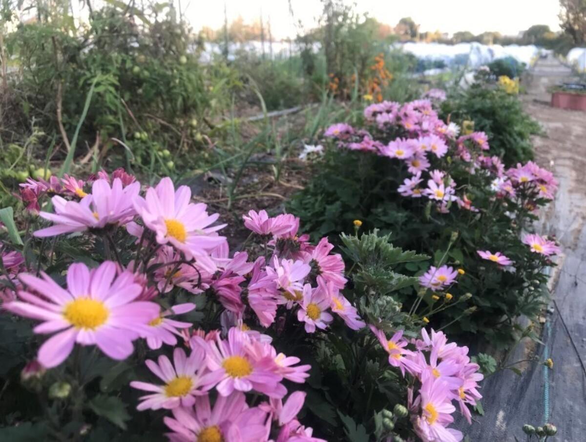 沢山のお花がお出迎えします!