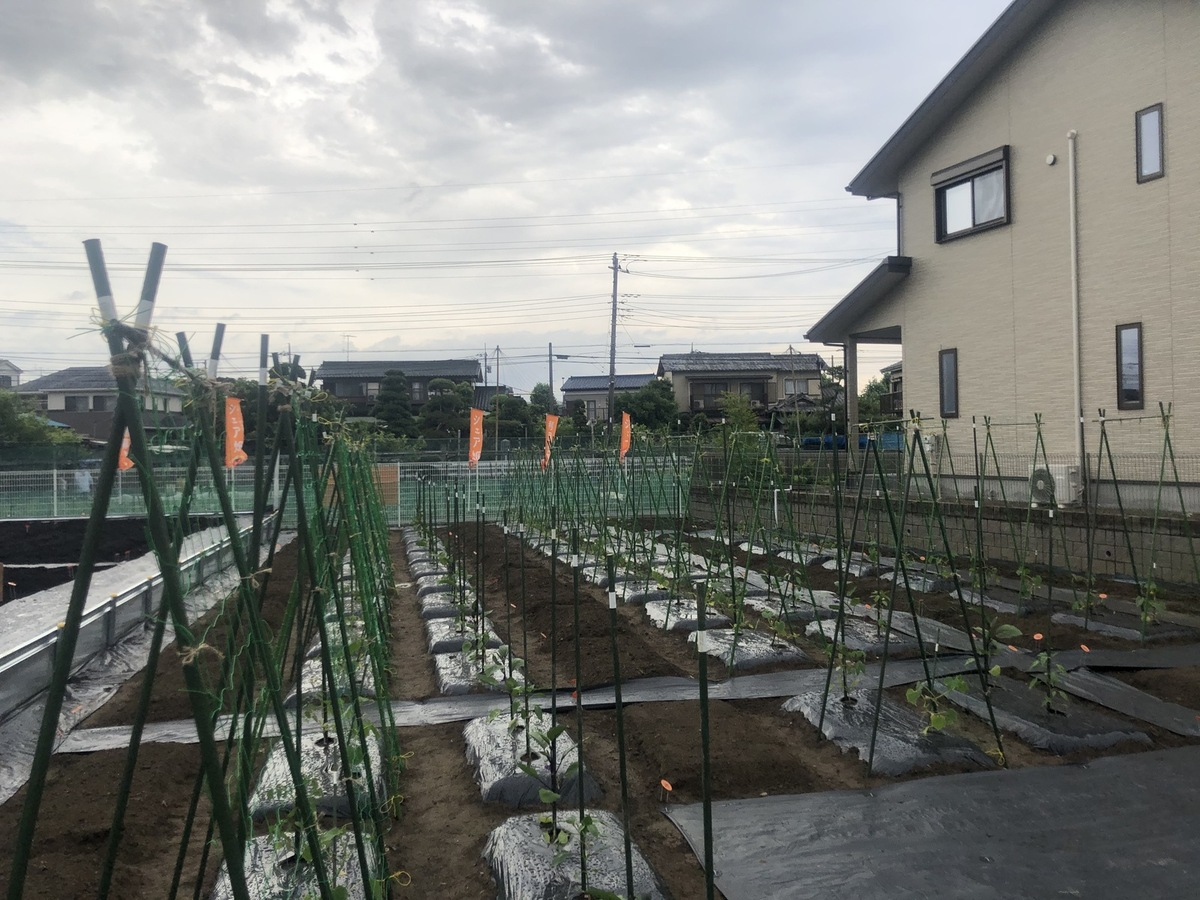 夏野菜の成長が楽しみ☆