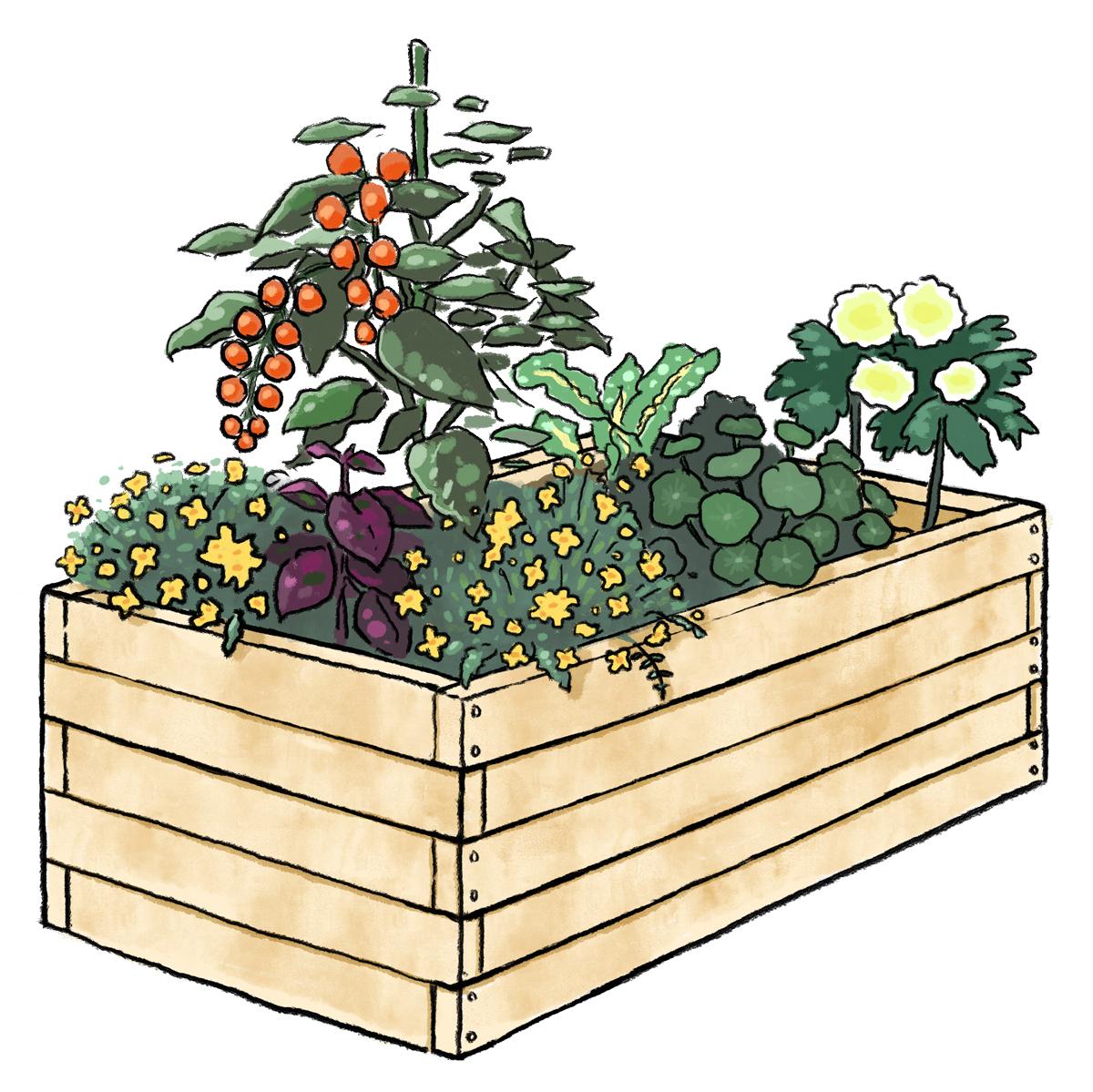 コンテナで野菜を栽培します!