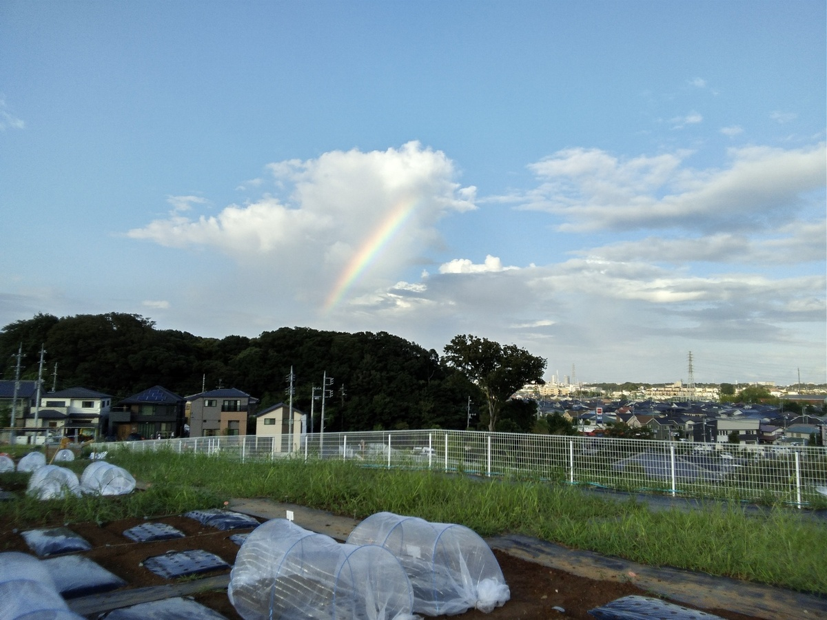 農園から見えた虹!