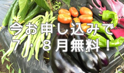 【7・8月キャンペーン第2弾】★最大1.5か月無料★夏のフリーレントキャンペーン!