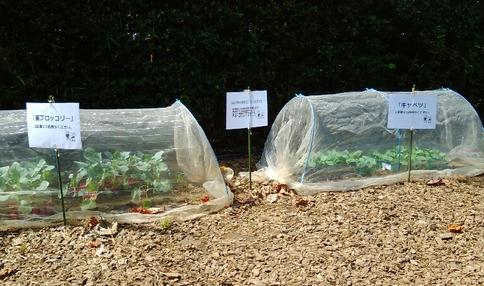 苗入荷完了!いよいよ秋冬野菜の植え付け開始です