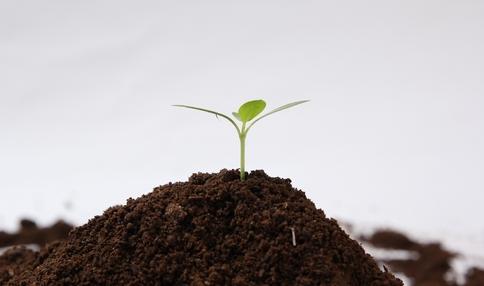 【野菜の育て方コラム】誰でもできる畑の微生物チェック!/畑で家庭菜園『土づくり編』