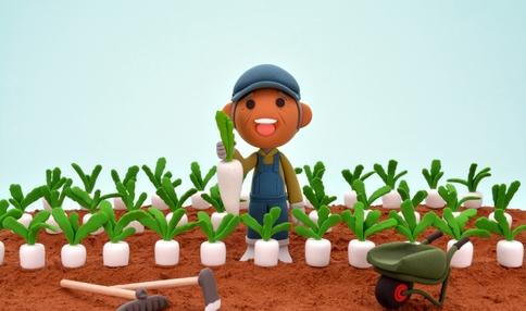 【野菜の育て方コラム】いい大根は間引きで決まる!大根の育て方のコツ/畑で家庭菜園『秋冬野菜編』