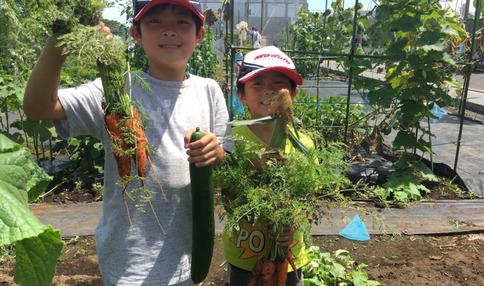 野菜いっぱい採れました!