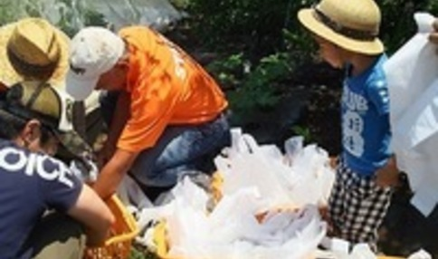 芋掘りイベント! みんなでお芋を掘ります
