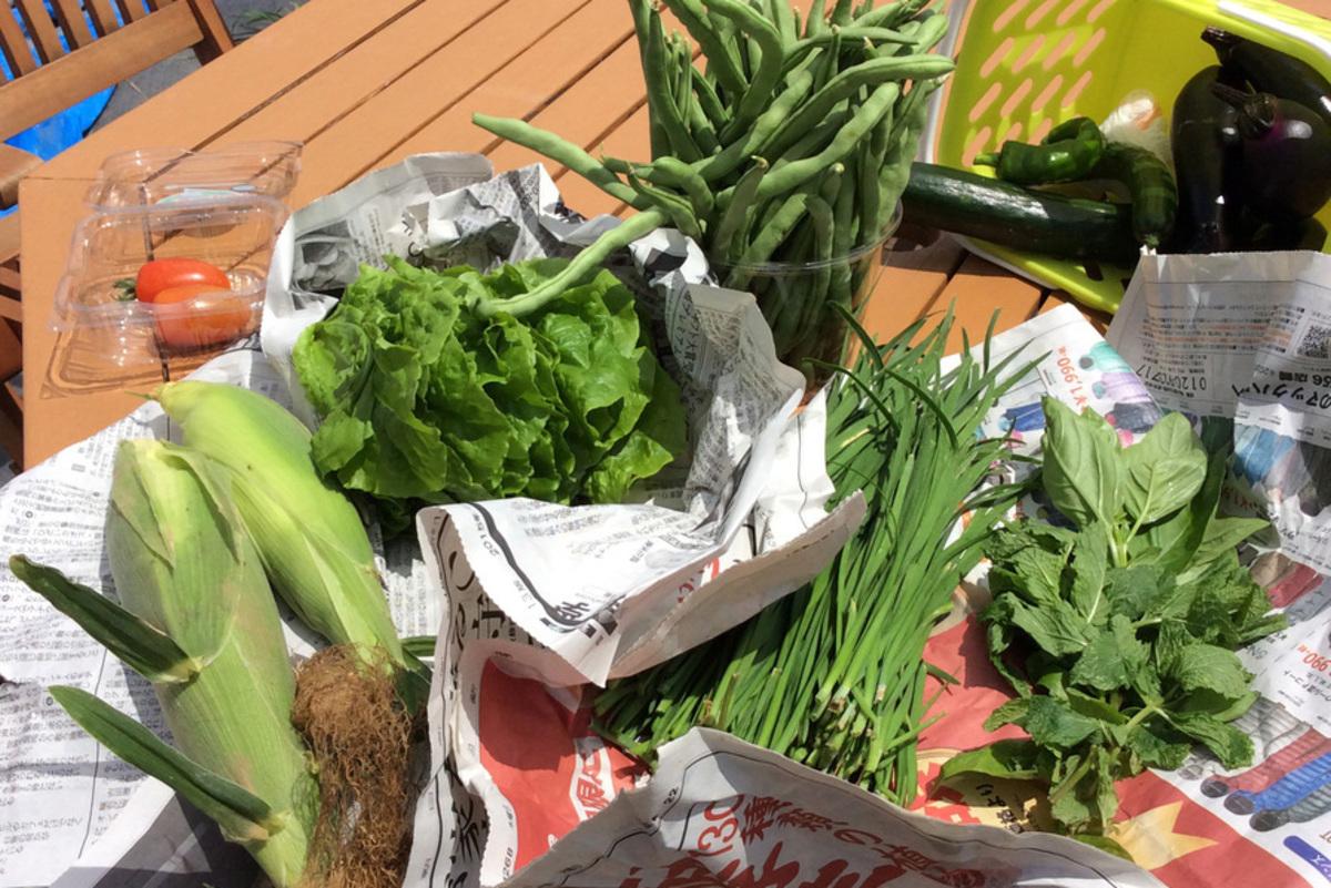 多くの夏野菜が採れました!