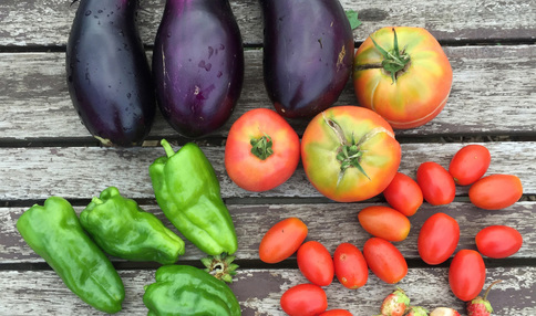 採れたての夏野菜たち