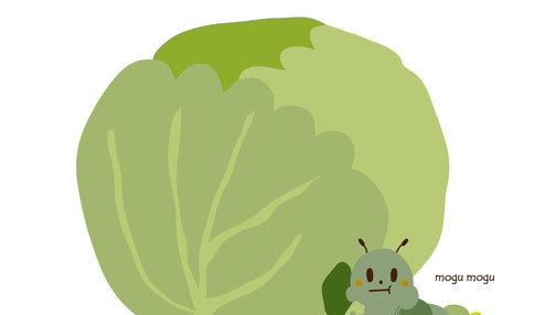 【野菜の育て方コラム】虫食いキャベツやハクサイをなんとか収穫する方法/畑で家庭菜園『秋冬野菜編』
